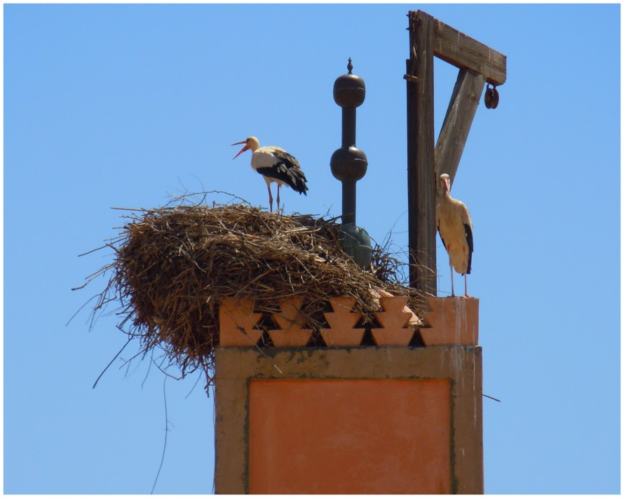 Storks in the Mellah, Marrakech