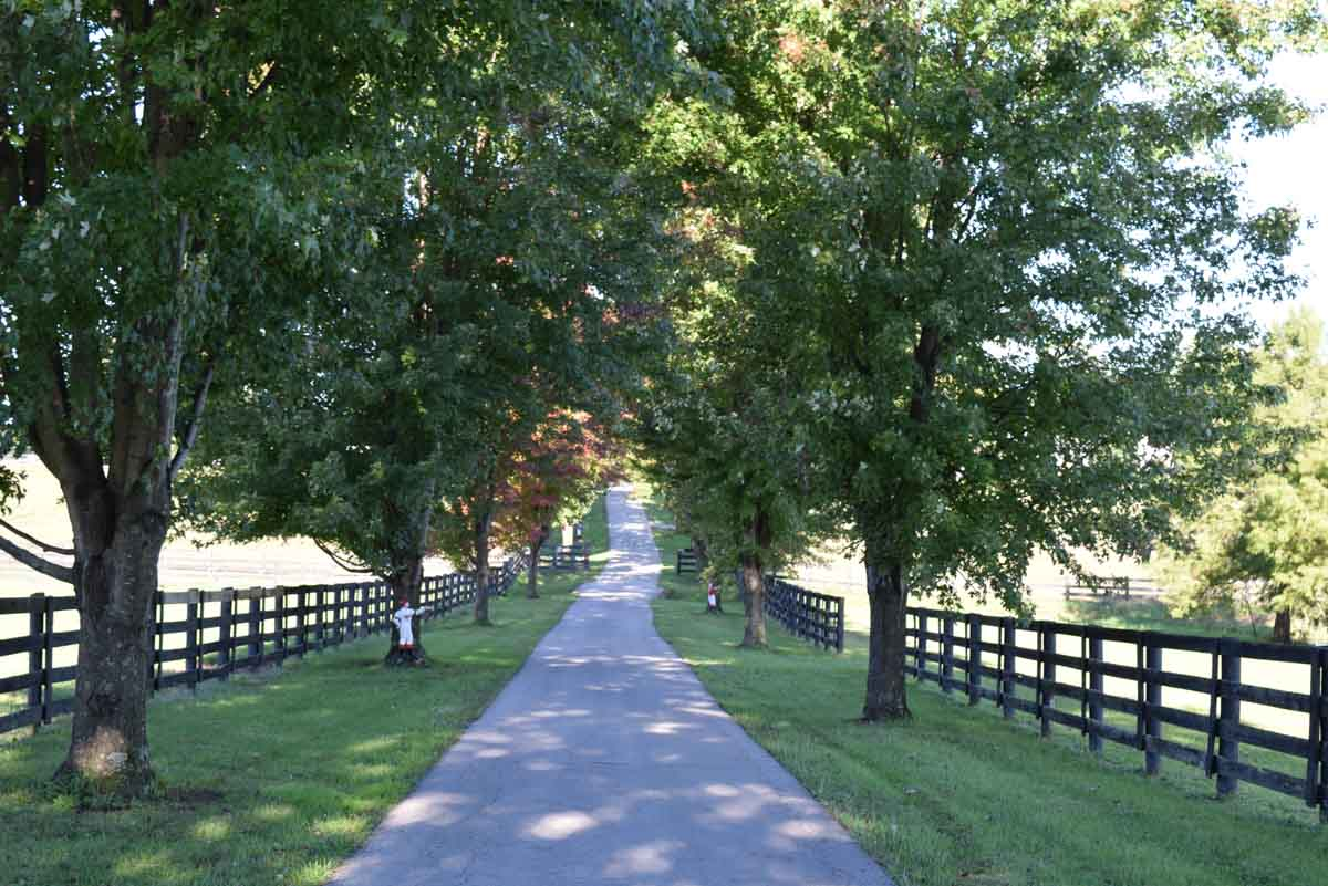 Heading into Old Friends, Georgetown, Kentucky
